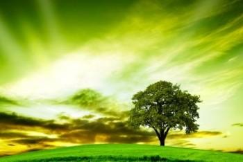 Oak Tree - King of the Woods